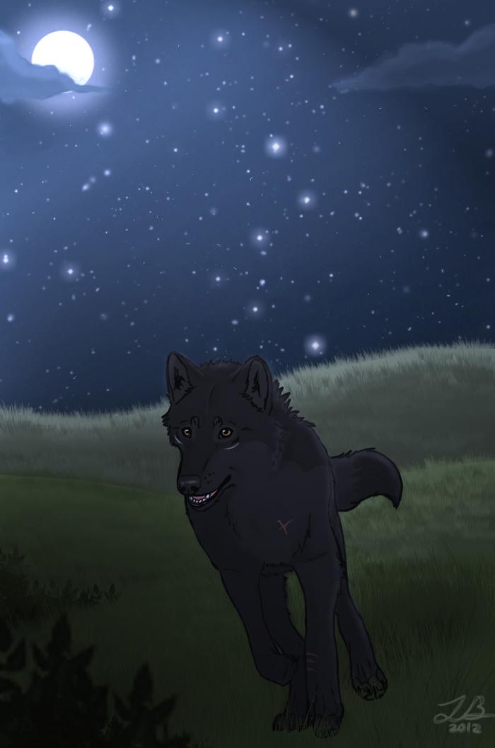 Wolf Runner by SilverWolf7444