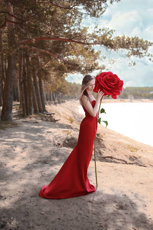 # Red  rose by Mishkina