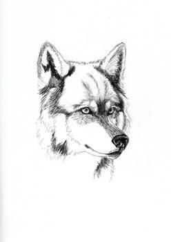 Wolf in Sketchbook BW
