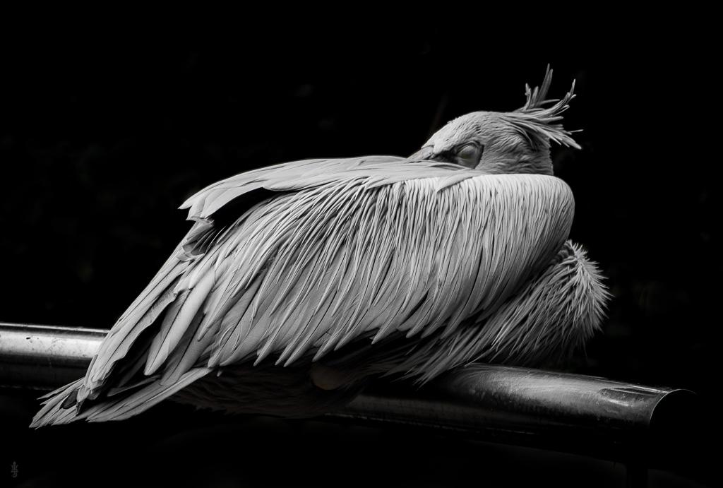 Malaysia Bird by Ultradragon