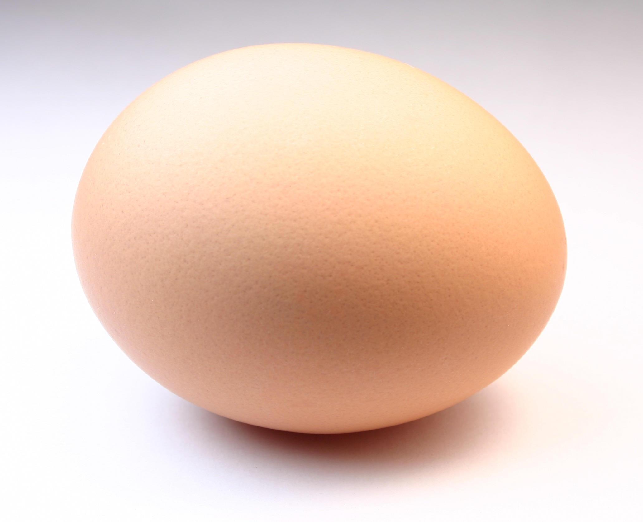 Perfect Egg By Fytastock On Deviantart