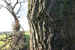 Bark Cobweb