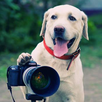 Joy, The Photographer by ShakilovNeel