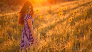 Puesta del sol de trigo