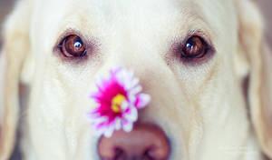 Flower Nose Close-up by ShakilovNeel