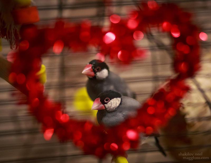 Love Couple by ShakilovNeel