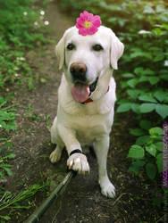 Doggie Selfie by ShakilovNeel