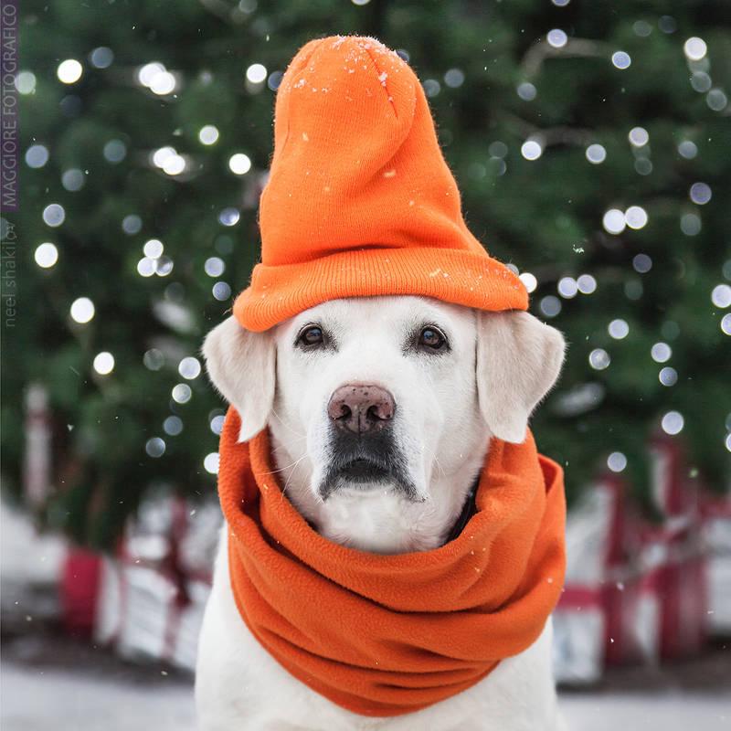 Orange Winter Look by ShakilovNeel