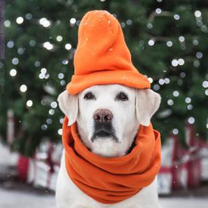 Orange Winter Look