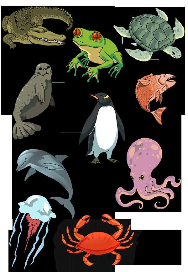 Water animals clipart
