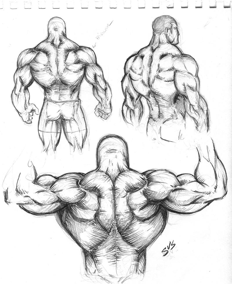 Muscular Back Study 01 by spacehater on DeviantArt