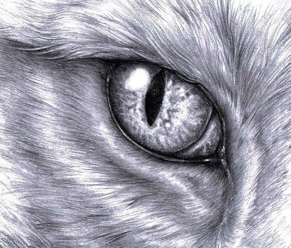Cats eye by WhiteK9