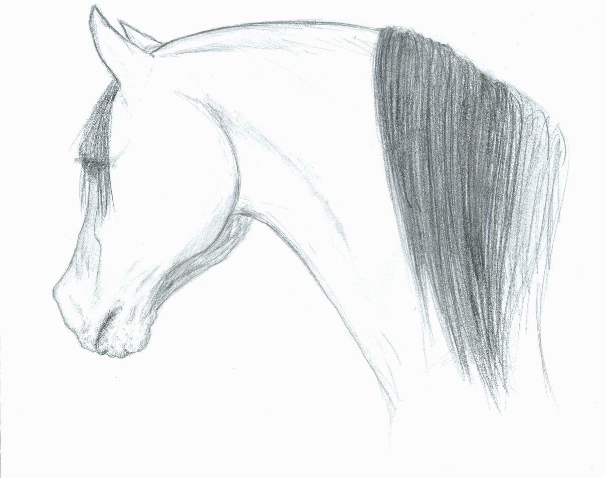 Horse Head Drawing Drawing Gray Arabian By Cheryl Poland Arabian