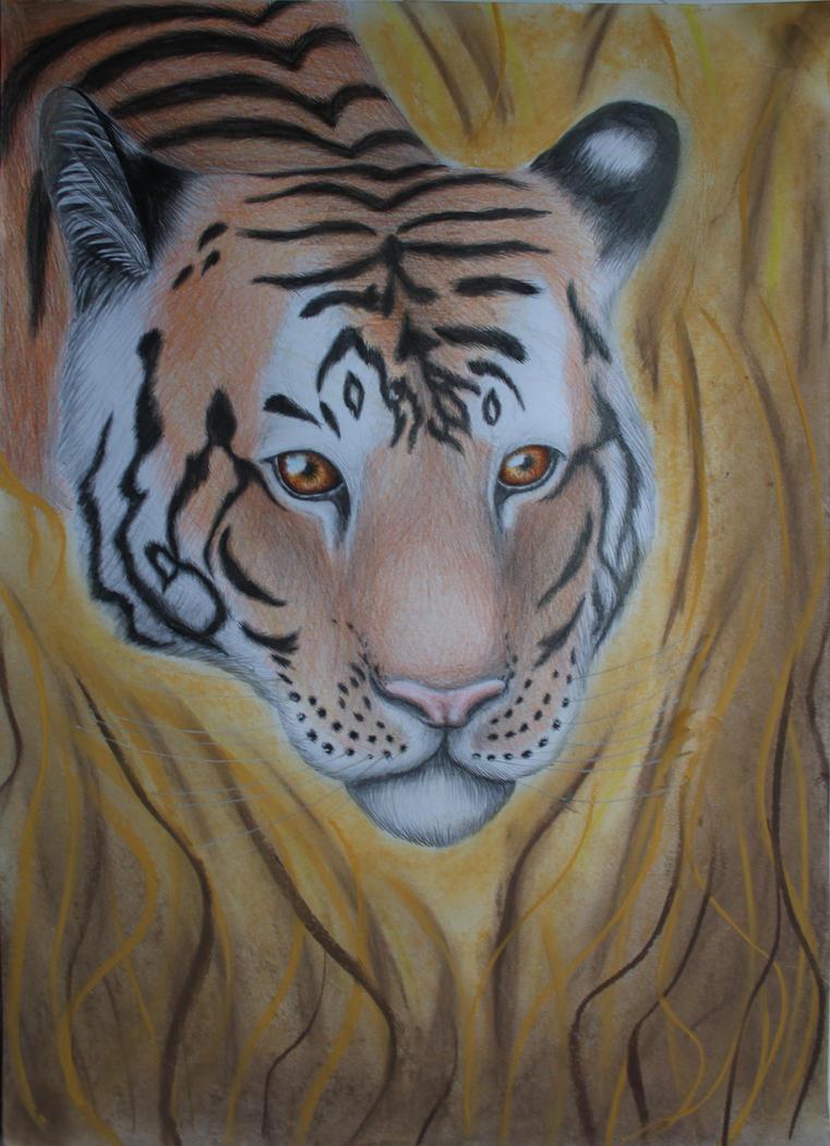 tigre by gentecita