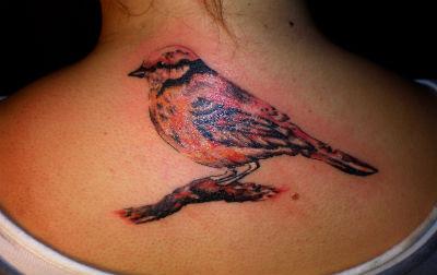 bird by rozeink