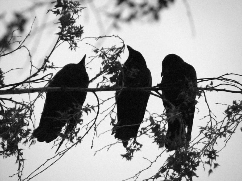 What is three black crows