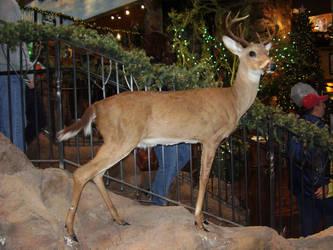 bambi side
