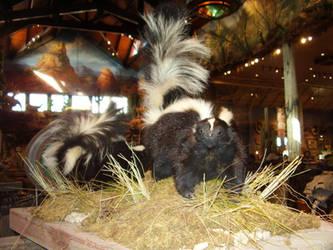 skunk 3