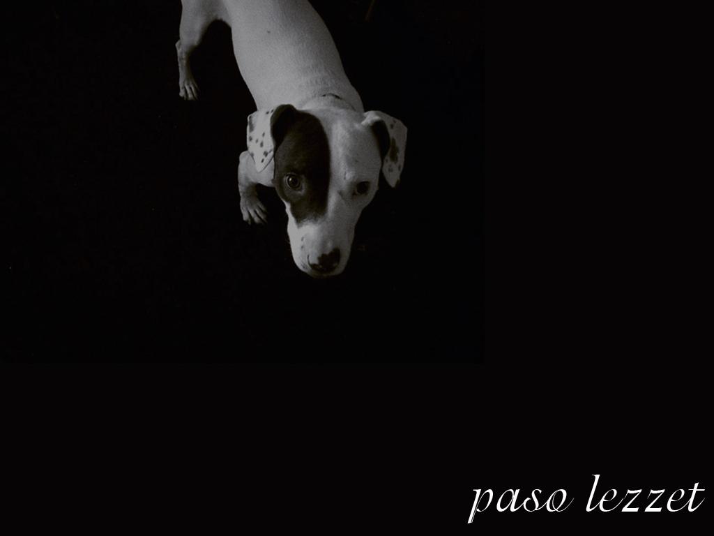 Paso Lezzet 001 by 2reddy