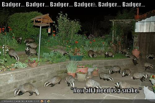 LOLs Badgers by Shquiggles