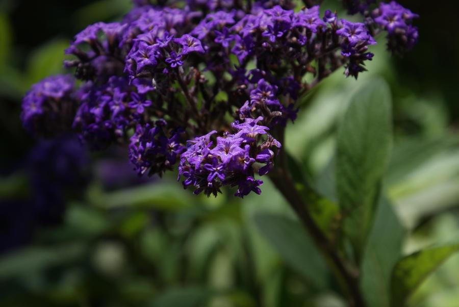 Little Purple by gamerhe11