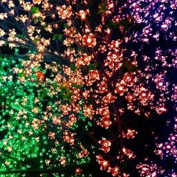 Little Lights of flowers by gamerhe11