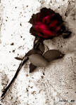 A rose for the dead.