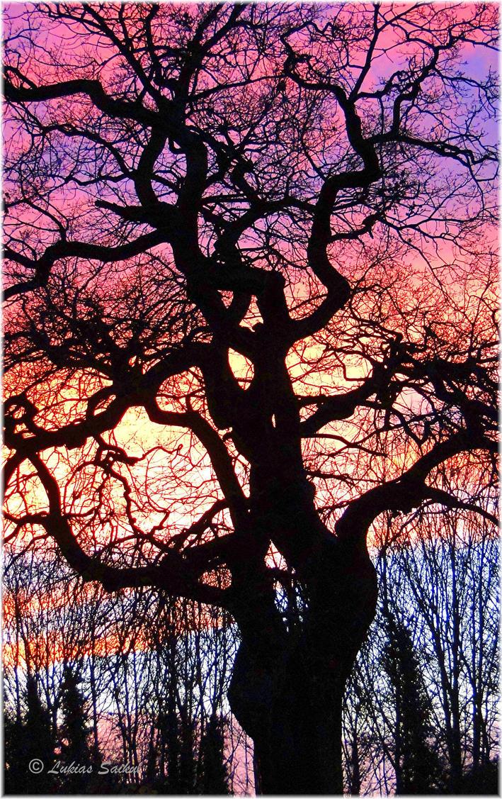 The old oak tree by lukias-saikul