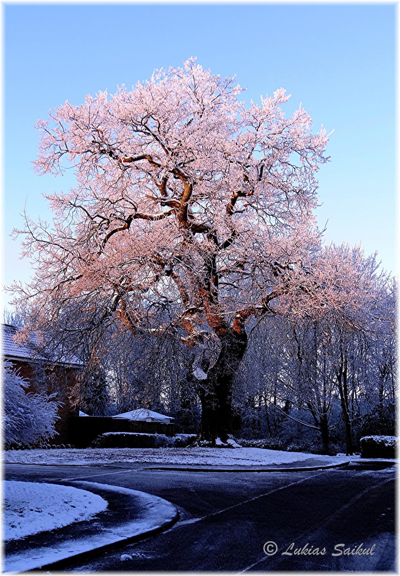 Winter Scene II by lukias-saikul