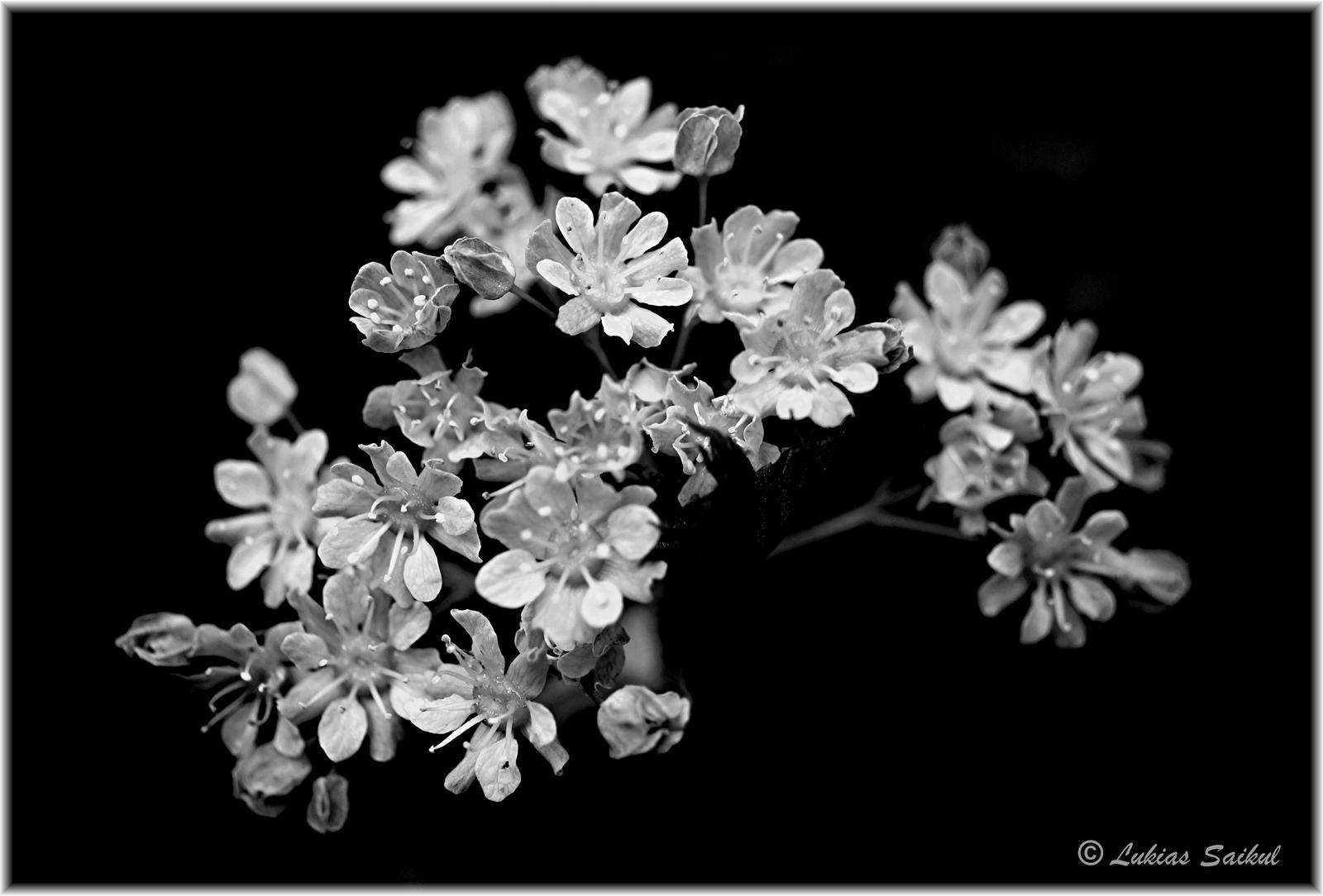 Spring 2013 VII by lukias-saikul