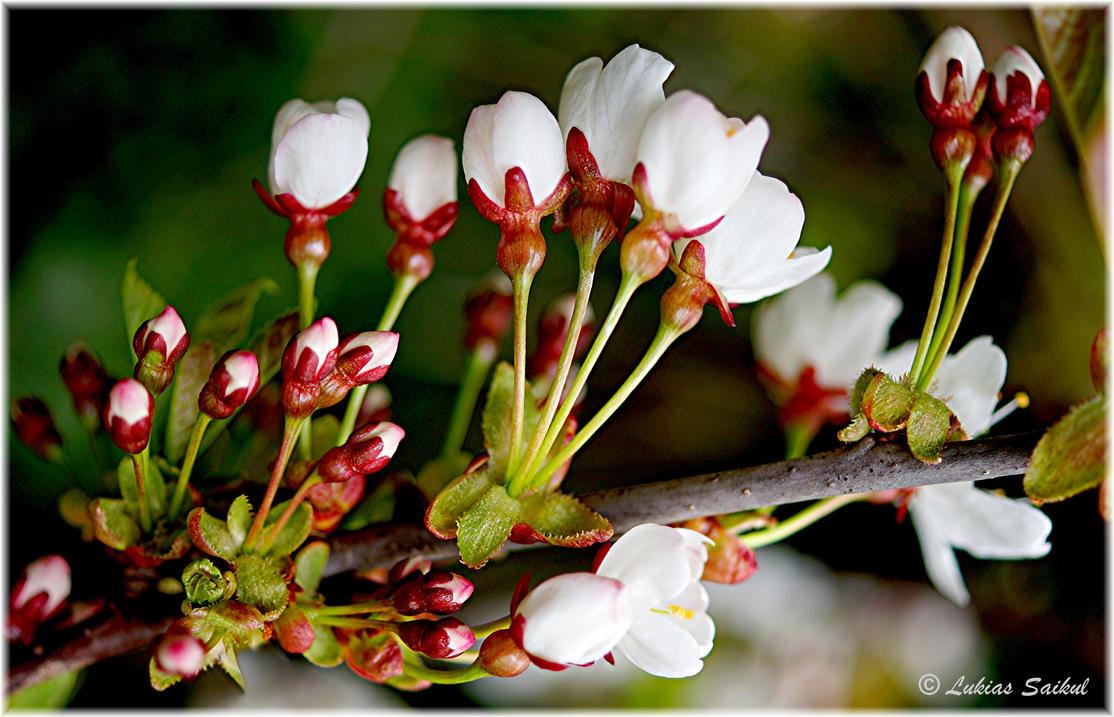 Spring 2013 XI by lukias-saikul