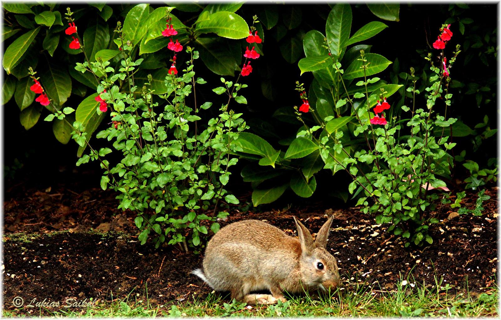 Backyard Wildlife VI by lukias-saikul