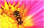 Hover Fly VI