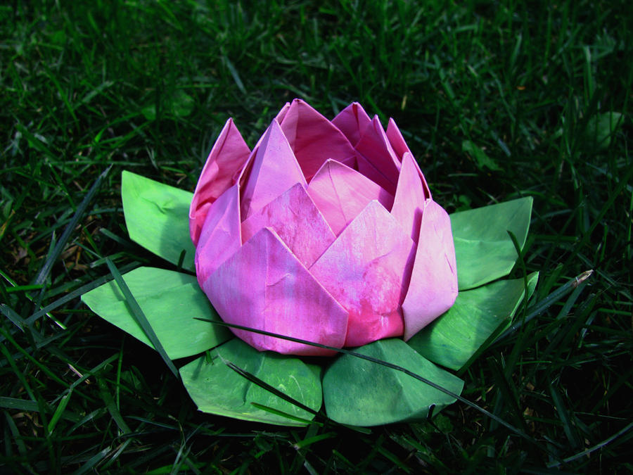 Origami Lotus Water Lily flower instructions - YouTube | 675x900