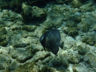 Angel Fish by WaterLily-Gems