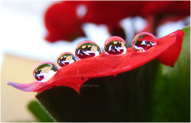 droplets. by einfachso