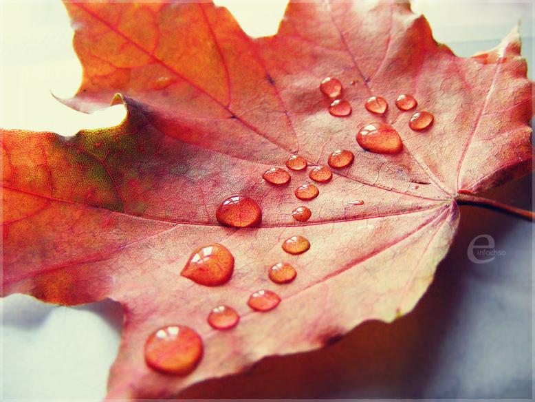 http://fc06.deviantart.net/fs36/f/2008/274/0/f/autumn_rain__by_einfachso.jpg