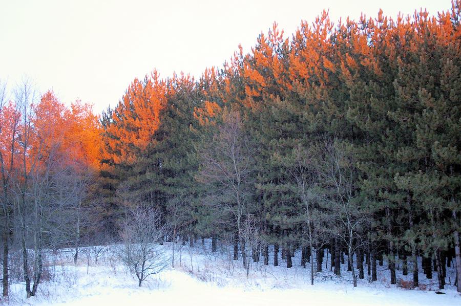 Golden Trees by FullShilling