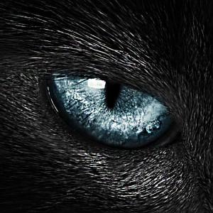 Lorenza79's Profile Picture