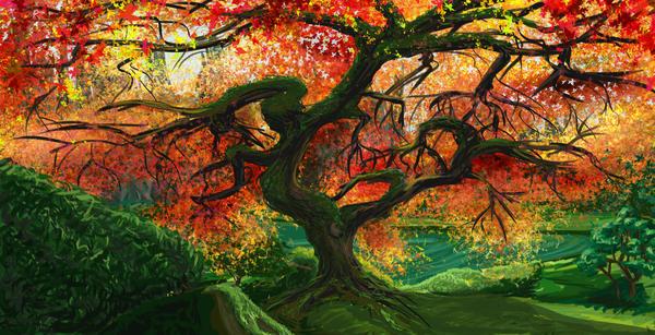 Japanese Maple by LindseyErin