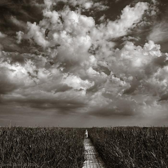 behind reed by vonrubinstein
