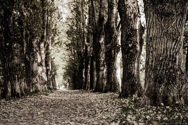 river of leaves by vonrubinstein