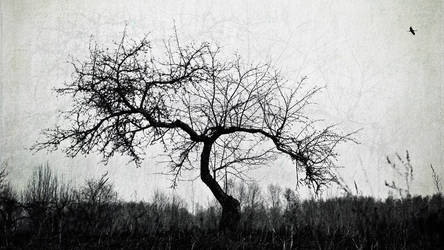 from roots by vonrubinstein