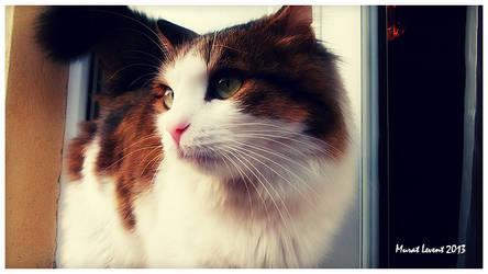 Cat by neodesktop