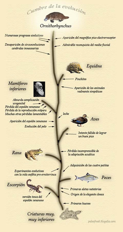 La escala evolutiva by PaleoFreak