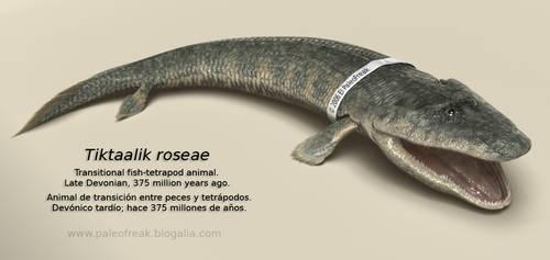 Tiktaalik roseae by PaleoFreak