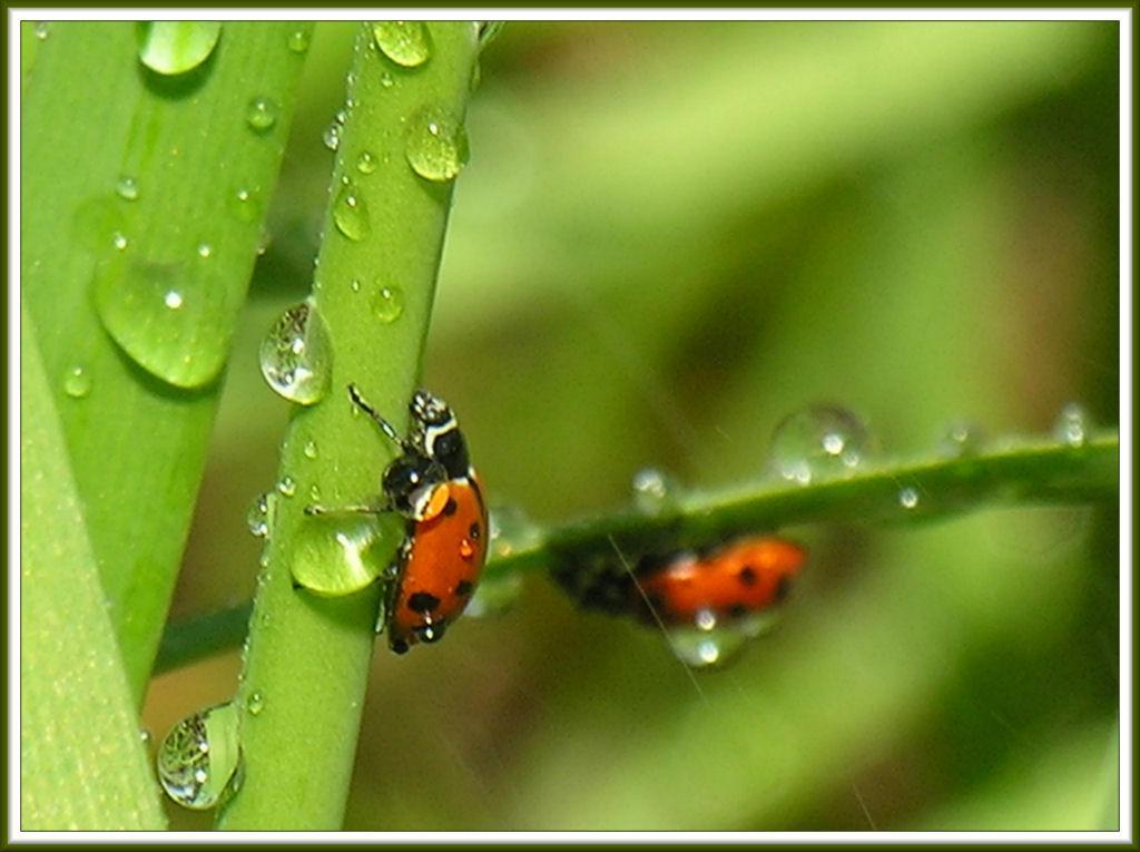 garden bugs by encleaver on deviantart