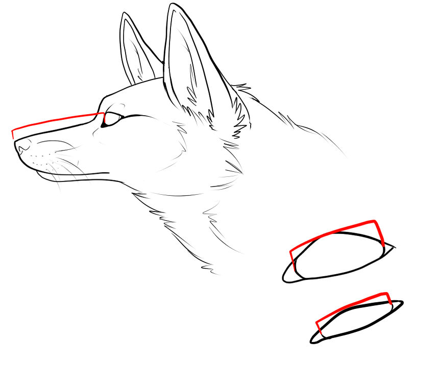 The Basics of Taxidermy and Mounting  by MilkyFoxWhiskers on