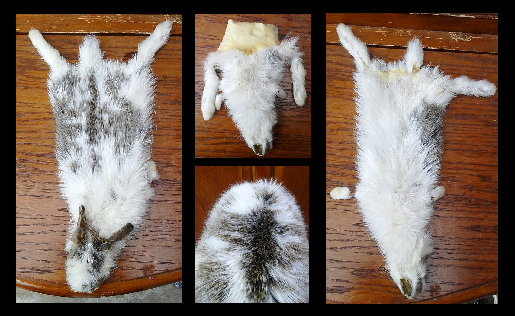 dry tanned domestic rabbit pelt sold by milkyfoxwhiskers on deviantart. Black Bedroom Furniture Sets. Home Design Ideas