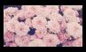Pastel Roses - Stamp by Starrceline